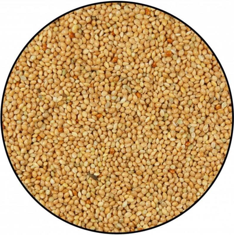 Graine de Millet Jaune 20 kg