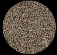 Graines de sarrasin 20kg