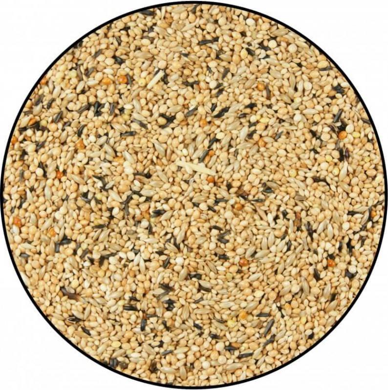 Miscela di semi per uccelli esotici