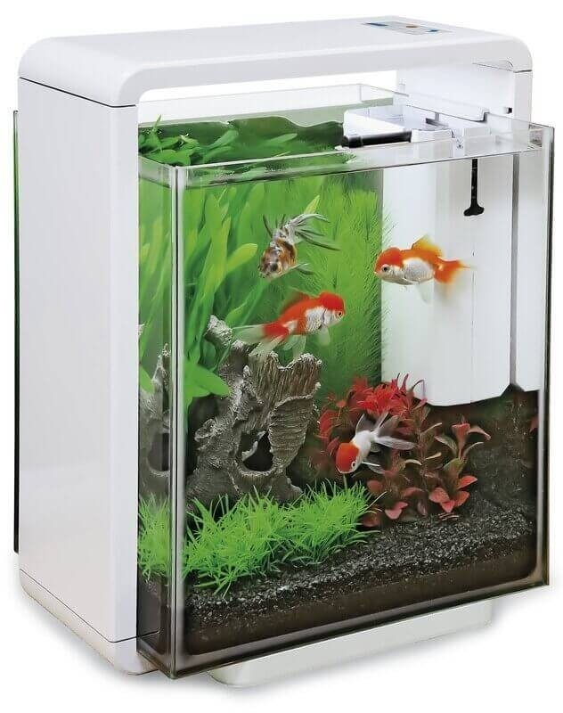 Aquarium blanc noir rouge home 25 xl aquarium et meuble for Aquarium rouge