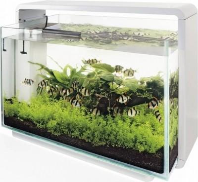 Aquarium blanc & noir home 60