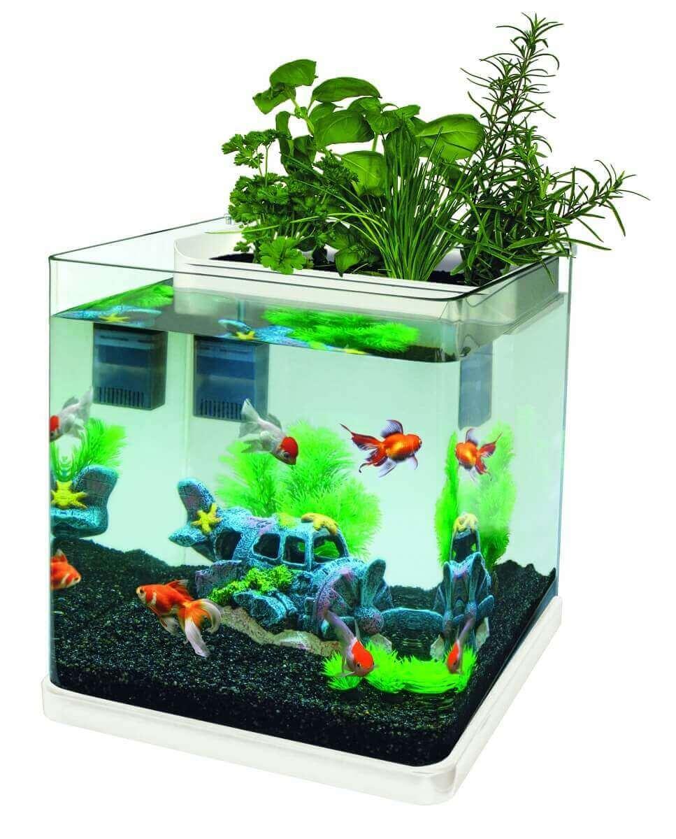 Aquariums aquaponics 10 23 aquarium et meuble for Aquaponics aquarium