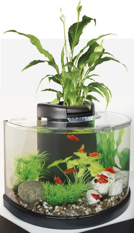 Aquariums Aquaponics 10 & 23