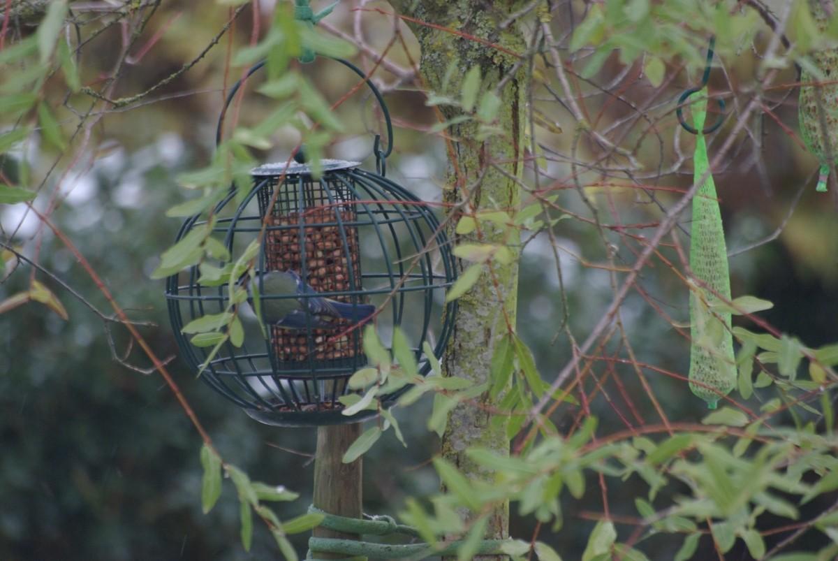 avis sur arachides d cortiqu es pour oiseaux du ciel. Black Bedroom Furniture Sets. Home Design Ideas