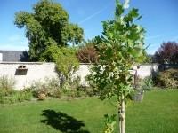 25205_Arachides-décortiquées-pour-oiseaux-du-ciel_de_MICHEL_204687916659d61bf0b653b7.33452844