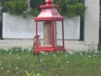 25207_Mélange-Essentiel-pour-oiseaux-du-ciel_de_Francoise_142573557759a55f5ad66210.28781248