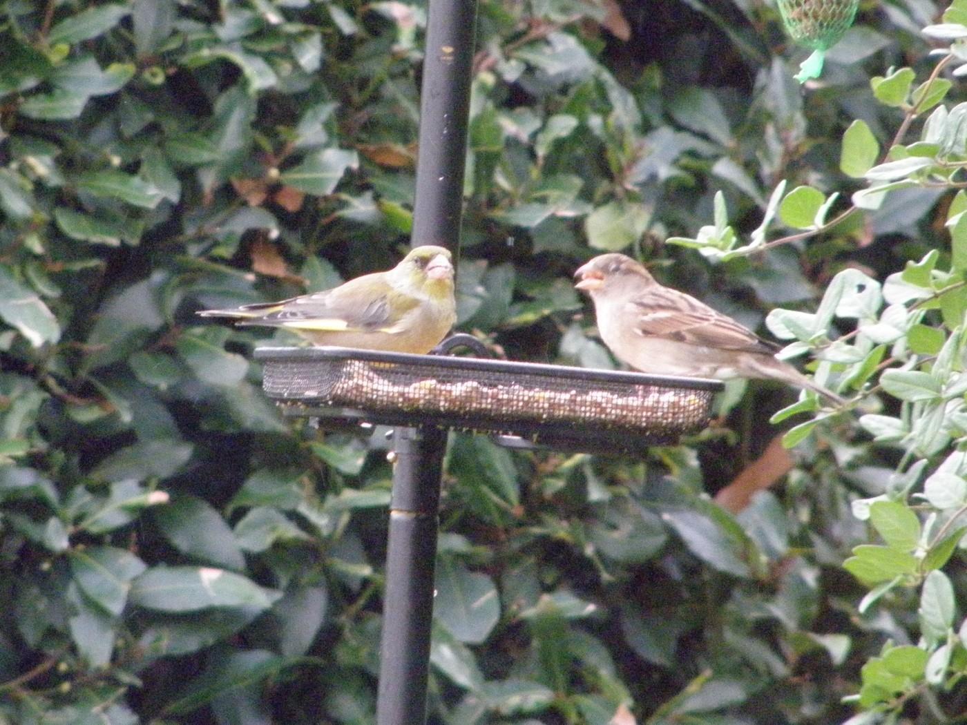 Avis sur m lange gourmet graines pour oiseaux du ciel - Distributeur de graines pour oiseaux ...
