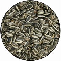 Sonnenblumenkörner, klein, gestreift (1)