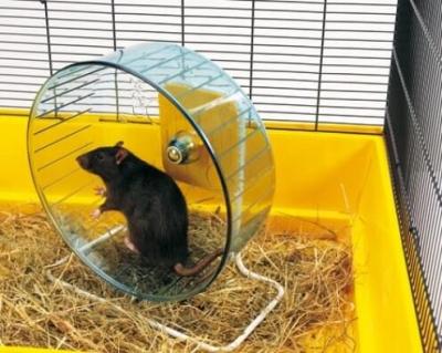 Rueda Rolly Gigante + pie para ratas