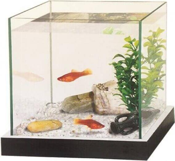 Kit de acuarios con grava y planta