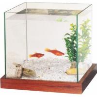 Kit aquarium avec gravier et plante  (2)