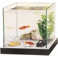 Kit aquarium avec gravier et plante  (3)