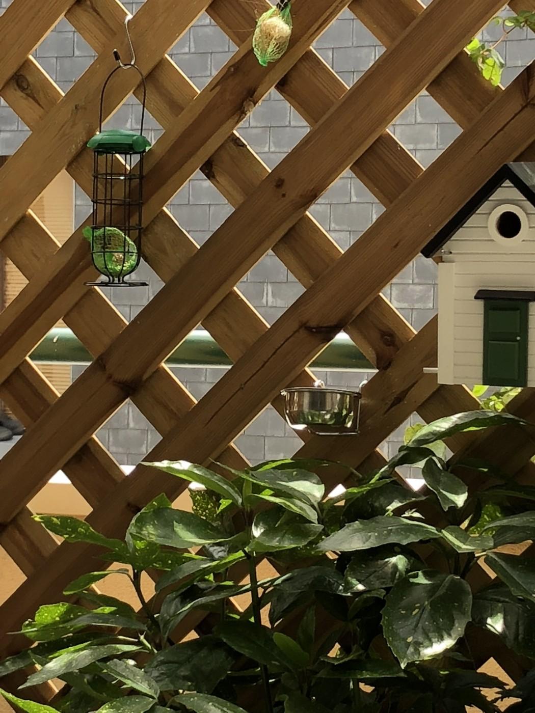 lots de boules de graisse pour oiseaux de la nature nourriture oiseaux. Black Bedroom Furniture Sets. Home Design Ideas