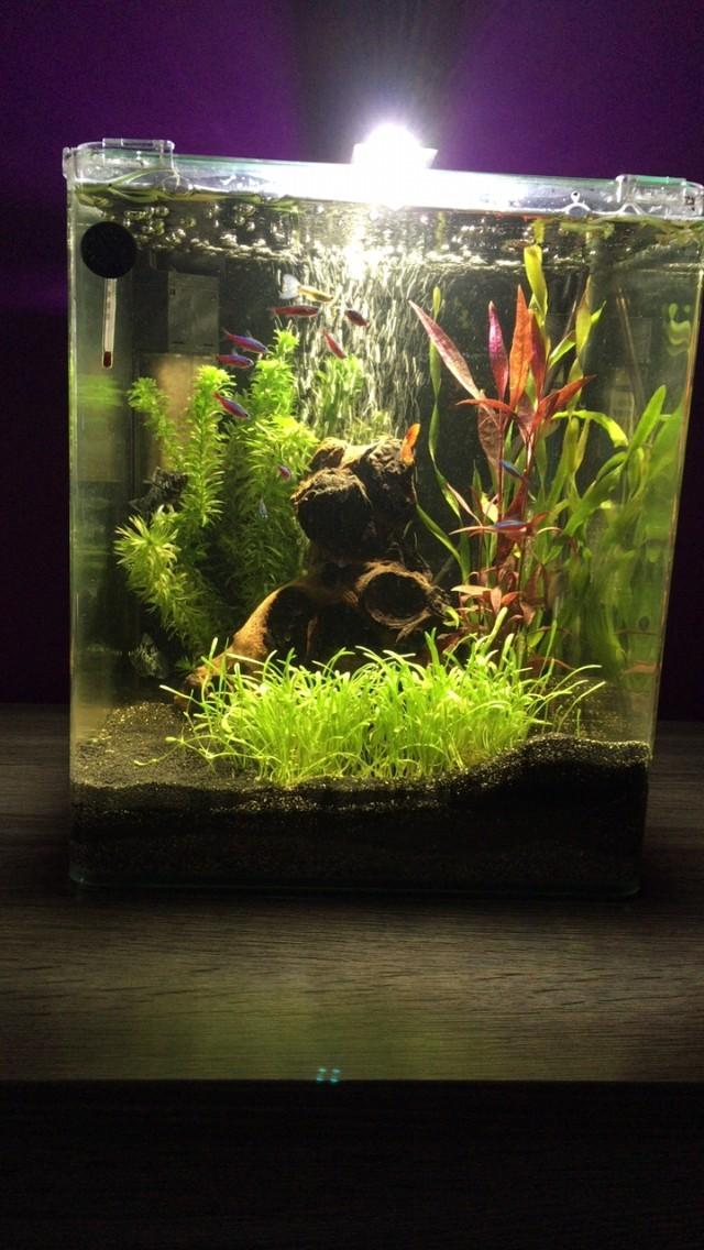 Complete Aquarium L Plus Nanocube 30 XOiZuPk