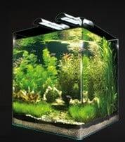 Aquarium nanocube complete plus 30 l aquarium et meuble for Poisson aquarium 30l