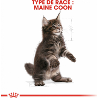Royal Canin Breed Maine Coon Kitten