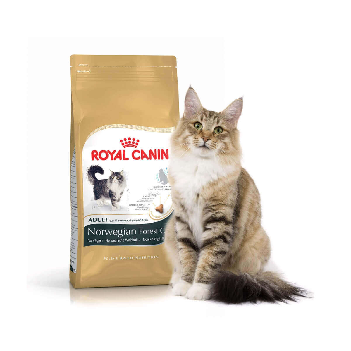 royal canin norvegian cat adult croquettes chat. Black Bedroom Furniture Sets. Home Design Ideas