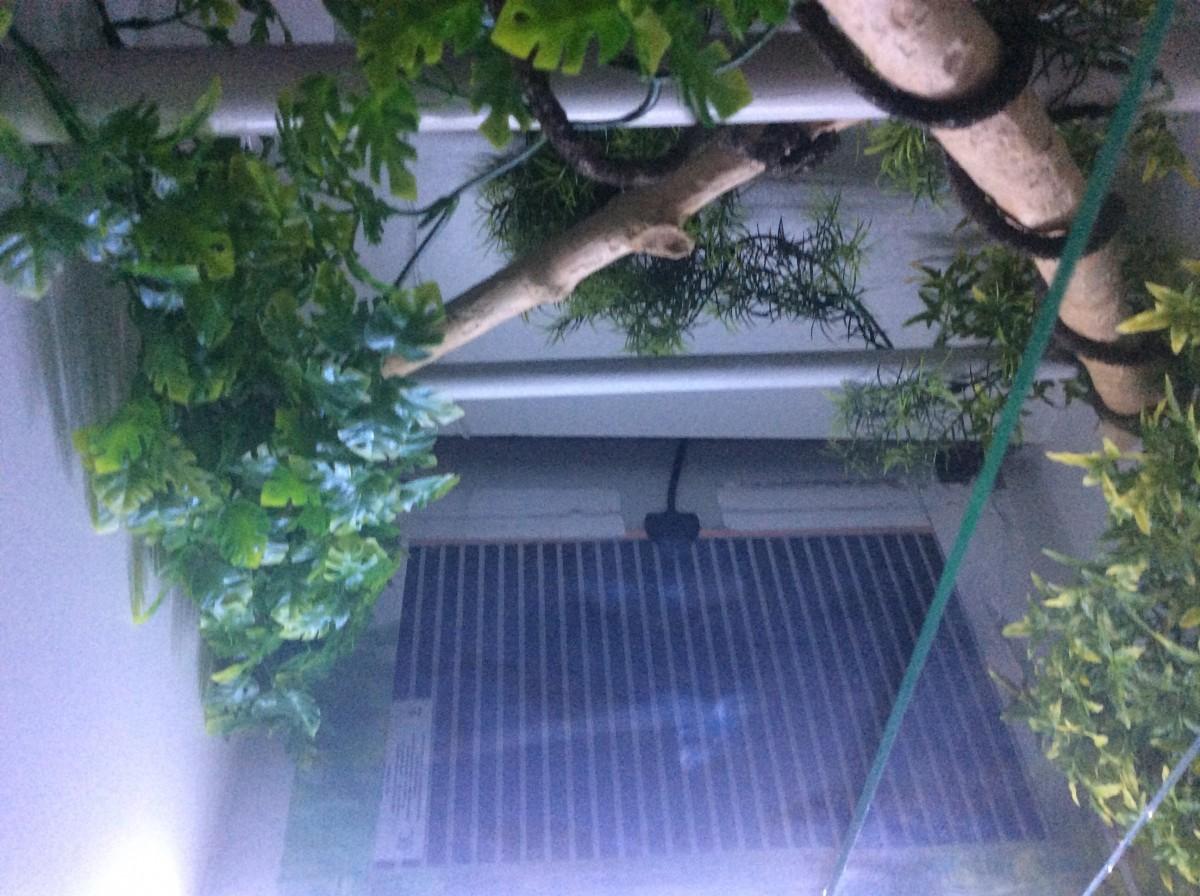 tapis chauffant terrarium en verre