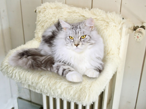 hamac radiateur yeti blanc pour chat couchage pour chat. Black Bedroom Furniture Sets. Home Design Ideas