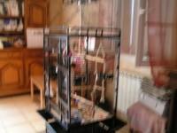 27899_Cage-YOUYOU-pour-perroquet--moyen-et-grande-perruche_de_patrick_1107105272579a264ed89979.29261656