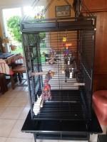 Cage-ZOLIA-YOUYOU-pour-perroquet--moyen-et-grande-perruche_de_catherine_165238325557ec2032f382d6.07766520