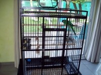 27900_Cage-JACO-pour-perroquet-_de_BERNARD_20638805595583a4f483b136.40248190