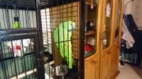 Cage-ZOLIA-JACO-pour-perroquet---164cm_de_JEAN-NOEL_7590753085c273c468d61f1.67540492