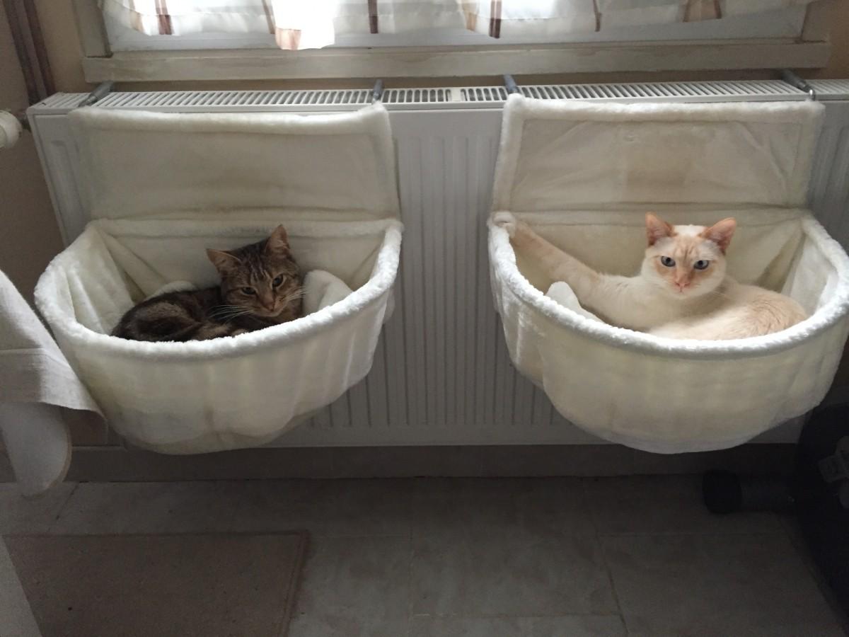 Cama de Gato Radiador
