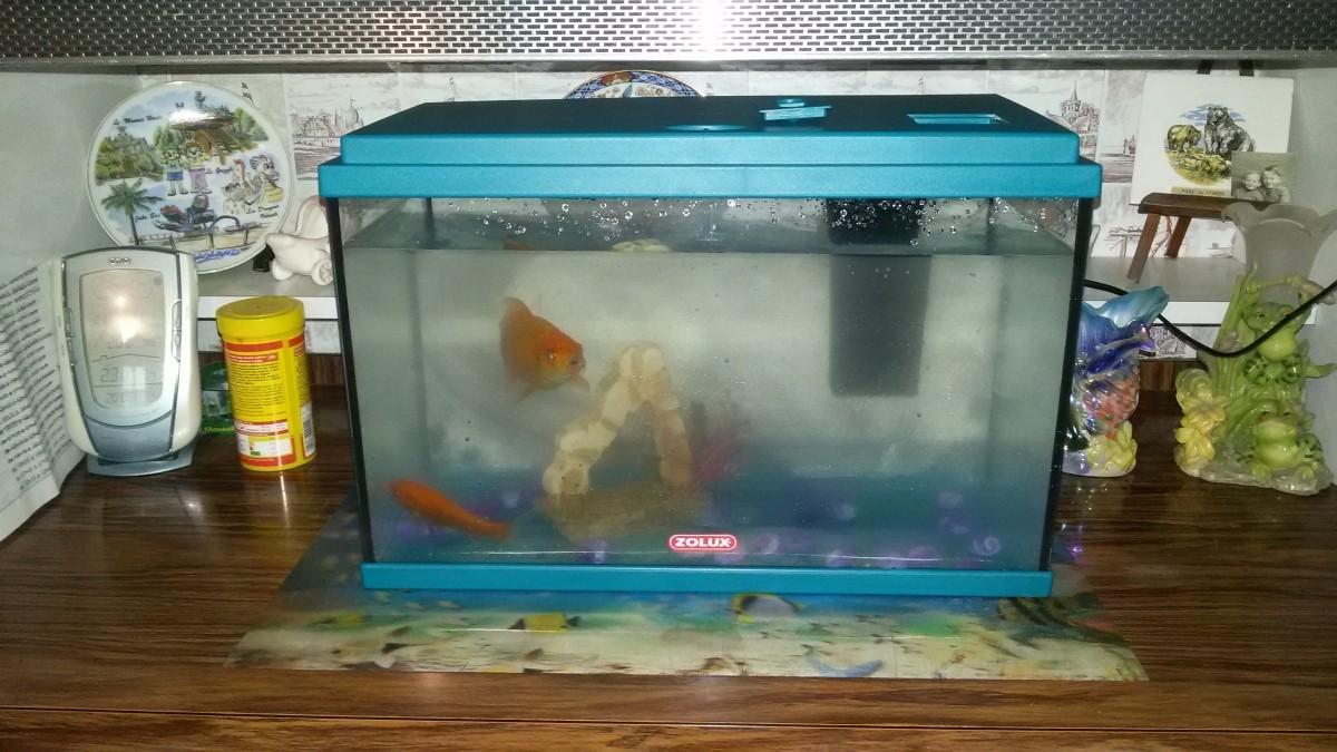 Aquarium NANOLIFE KIDZ in blau