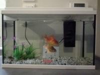 Aquarium-NanoLife-KIDZ-blanc_de_Magali_12560605735a67af0f4a92f7.06840272