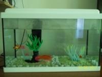 Aquarium-NanoLife-KIDZ-blanc_de_severine_1947199254594a62b7a781e3.08169232