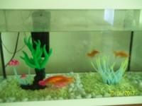 Aquarium-NanoLife-KIDZ-blanc_de_severine_25793863594a62f0e707a3.09239066