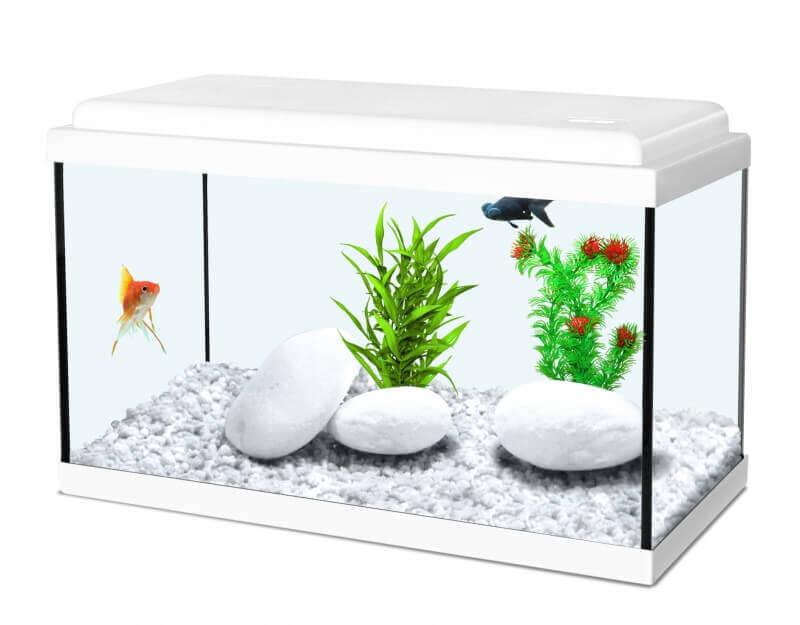 Aquarium NanoLife KIDZ blanc_0
