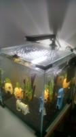 28178_Aquarium-Nanolife-CUBE-noir_de_Aurelien_694534761562f67c64bb5d0.23562725