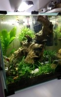 Aquarium-Nanolife-CUBE-noir_de_Aurelien_142183510457e8e07d7e0157.15877109
