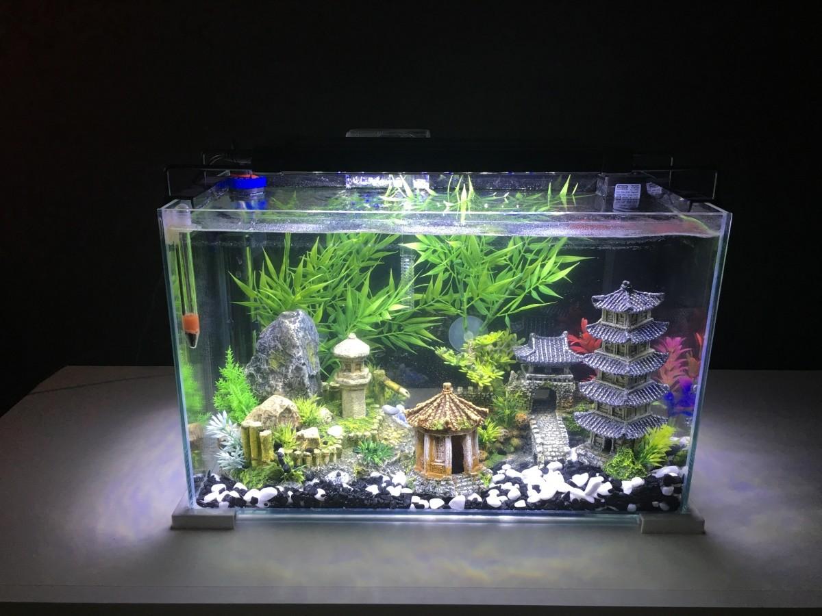 aquarium nanolife first blanc aquarium et meuble. Black Bedroom Furniture Sets. Home Design Ideas