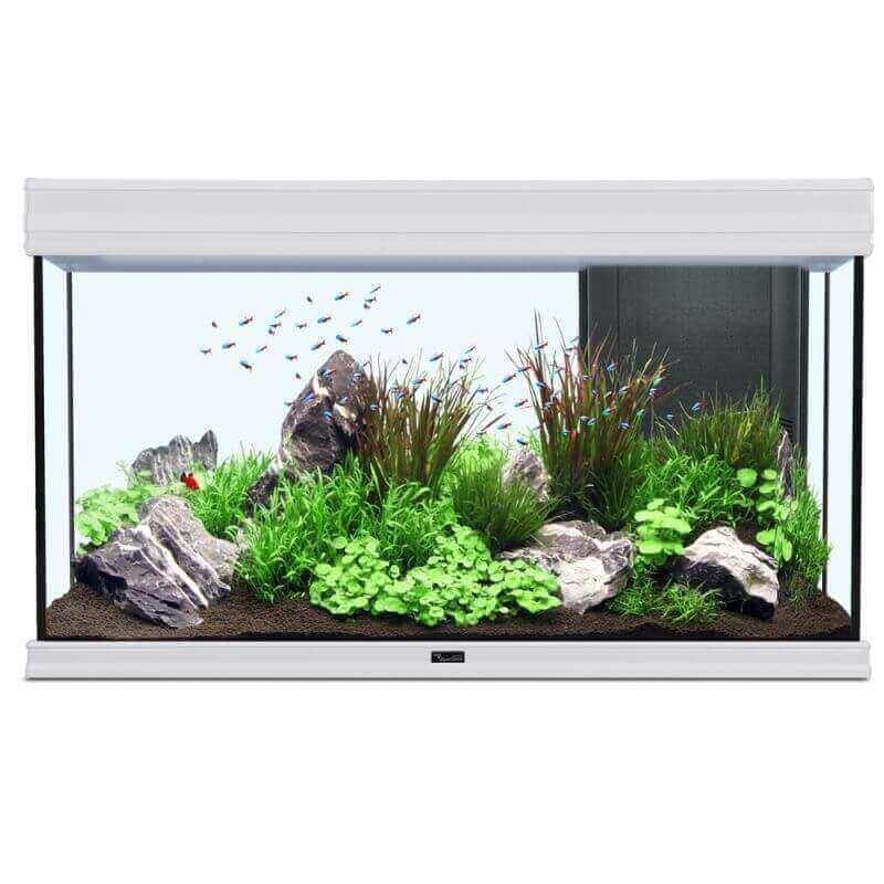 Aquarium AQUA FUSION LED Blanc_5