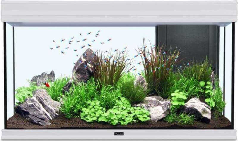 Aquarium AQUA FUSION LED Blanc