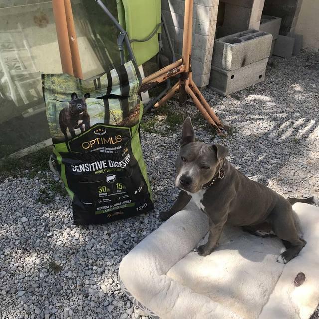chien client optimus