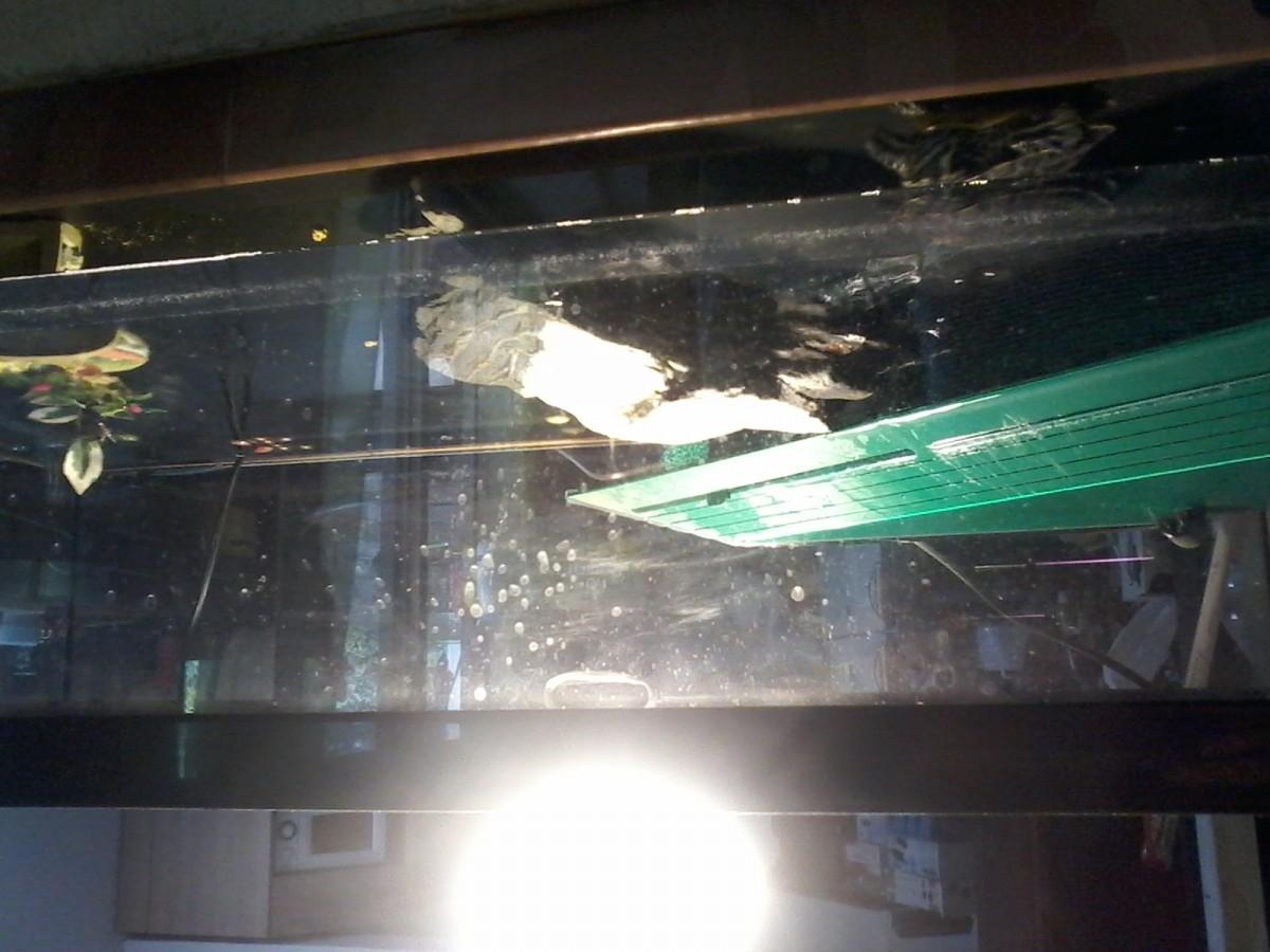 Avis sur aquarium tortum noir avec filtre for Filtre aquarium tortue