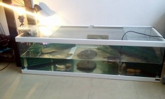 28739_Aquarium-Tortum-avec-filtre-blanc_de_VIRGINIE_104323818255929d6d69c6f6.59851690