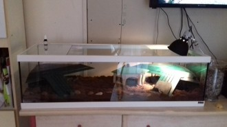 Aquarium-Tortum-avec-filtre-blanc_de_Sophie_16108204185a79cee93ae946.60429820