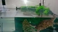 28739_Aquarium-Tortum-avec-filtre-blanc_de_JEAN-DENIS_1021299157584a5488e81510.27663883