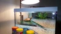 28739_Aquarium-Tortum-avec-filtre-blanc_de_Julie_1281146280598ac4395ba329.95370459