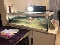 28739_Aquarium-Tortum-avec-filtre-blanc_de_frederic_4693836985a9e56588bc016.95849696