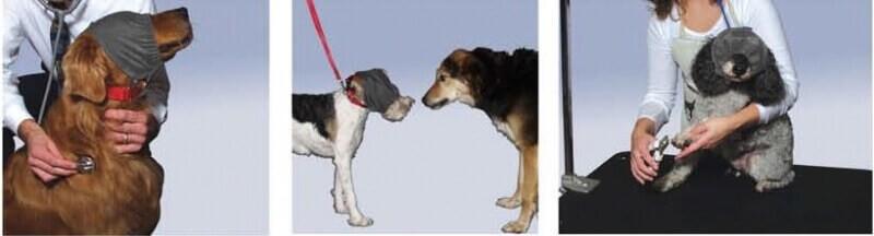 Bandeau calmant & anti-stress pour chien_3