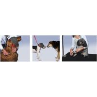 Bandeau calmant & anti-stress pour chien (4)