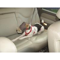 Bandeau calmant & anti-stress pour chien (2)