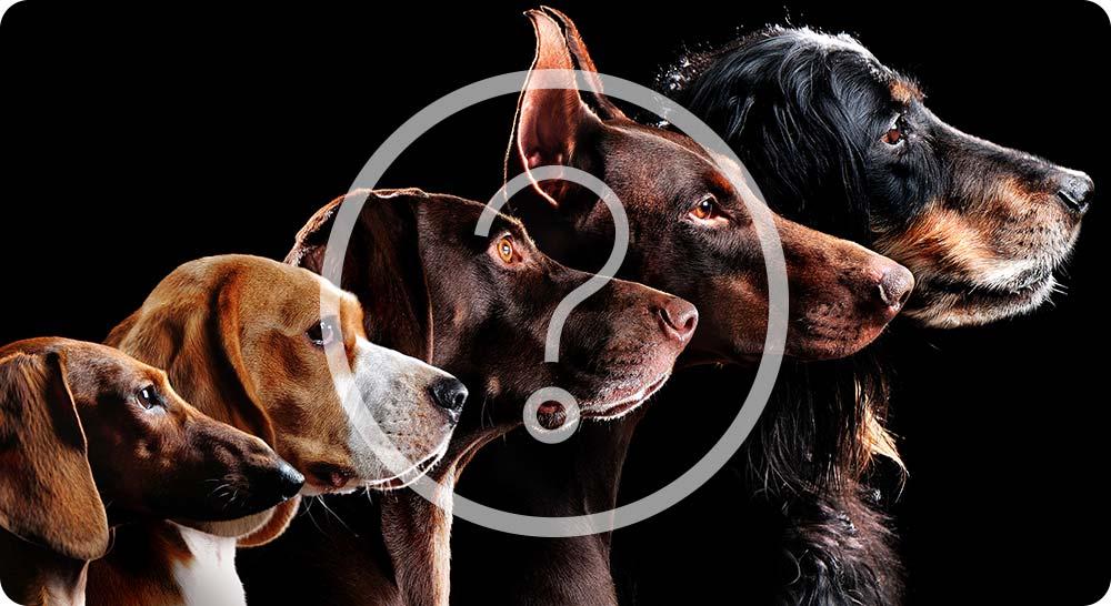 Différentes races de chiens