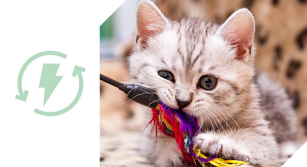 croquettes chatons quality sens zoomalia croissance